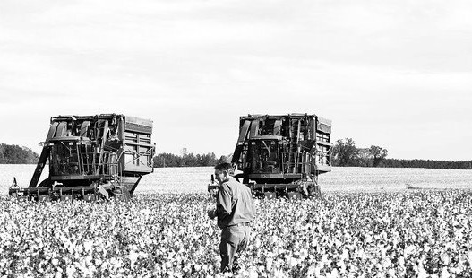 My Granddad, Floyd Hughes, Jr. In his cotton field in Samantha, Alabama